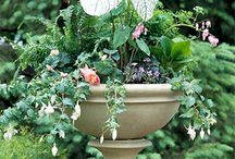 Container Gardening  / by Richard Carter