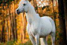 Hestebilder