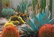 habitat de las plantas 1