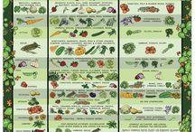 Gardening Stuff / Gardening