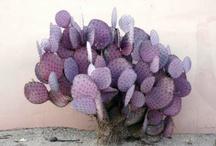 Beautiful Cacti / by Tania Cavenecia Torres