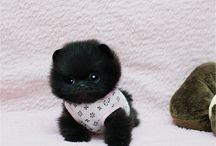 Cute Fluff Balls. <3