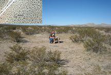Sivatagok - Deserts