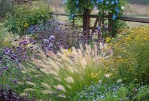 gardening / by Christina Cundari