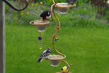Birds, bird baths, bird feeders and more bird stuff / Stuff about birds / by Cheryl Ann Zlomke