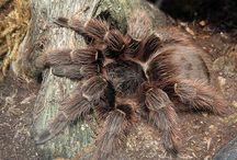 Beginner Tarantula Pets / List of all the best tarantulas for beginners