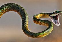 Snake Documentary
