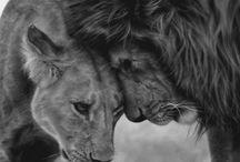 Animals / by Sara Colombo