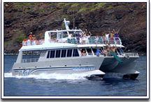 Maui Trip / by Wendy Coats