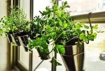 Hortaliças e Jardins / by Um lugar para chamar de meu