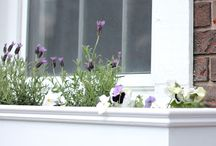 ~window boxes~