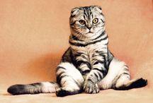 Meow / www.catyourlife.com #catyourlife#cats #catlife #katzenschmuck #katze#schmuck #cat #katzenliebe #cat #lovecat