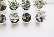 Cultivos/ jardín