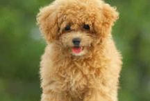 My dream dog and things to her