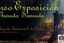 Concurso Exposición de Ganado Saneado / Celebramos el 124 Concurso-Exposición Municipal donde se enaltecen las razas de ganado del Concejo de Caso.