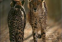 Awesome wild animals