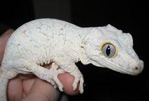 Reptiler/Frosker