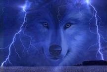 Lobos / by Bring Tha Flaiva