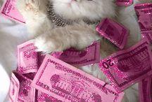 Neko Cat Gatito