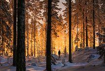 lys i skogen