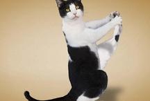 Animal Gymnastics