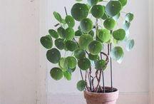schöne Pflanzen