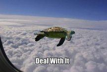 Animals / Turtle