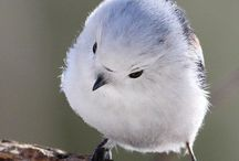 Anak Burung Walet