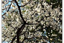 Spring in Big D!