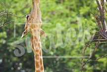 Animals & Pets Photography