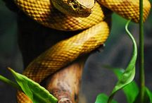 Repriles and Wildlife / Interesting reptiles and animals