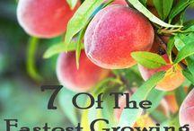 Fruit Tree Ideas