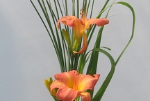 National Capital Daylily Show