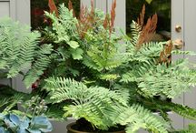 Blomster og grønne planter