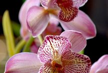Orchids / by Zoophi