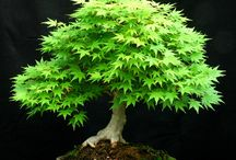 bonsai / 盆栽と出会う