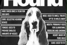 Anatomy of basset hound