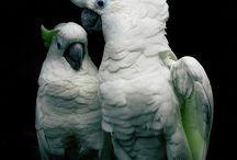 Joy: Cockatoos / The cockatoo is a truly amazing bird!