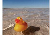 Duckies At Play