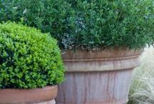 Garden-Potted Plants