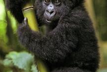 Søte dyr / Bilder av SØTE dyr!!