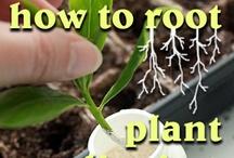 root plants