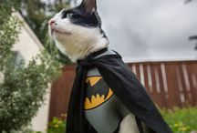Dress Up Your Cat / Cats in Costumes (Not necessarily for Halloween)