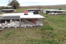 Chicken Tractor Farming Album
