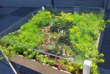 sukulenty - succulents