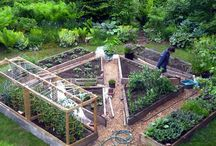 garden for vegetable