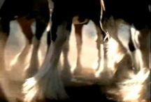 Budweiser Clydesdale Commercials. / Great video's / by Rose Burris