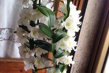 Le mie Orchidee / Tutta la mia collezione