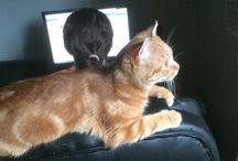 Garfield! :) / A kis jàtèkos! :)