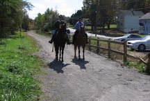 Equestrians Welcome! / Equestrians are welcome on the D&H Rail-Trail from Simpson to the NY border!